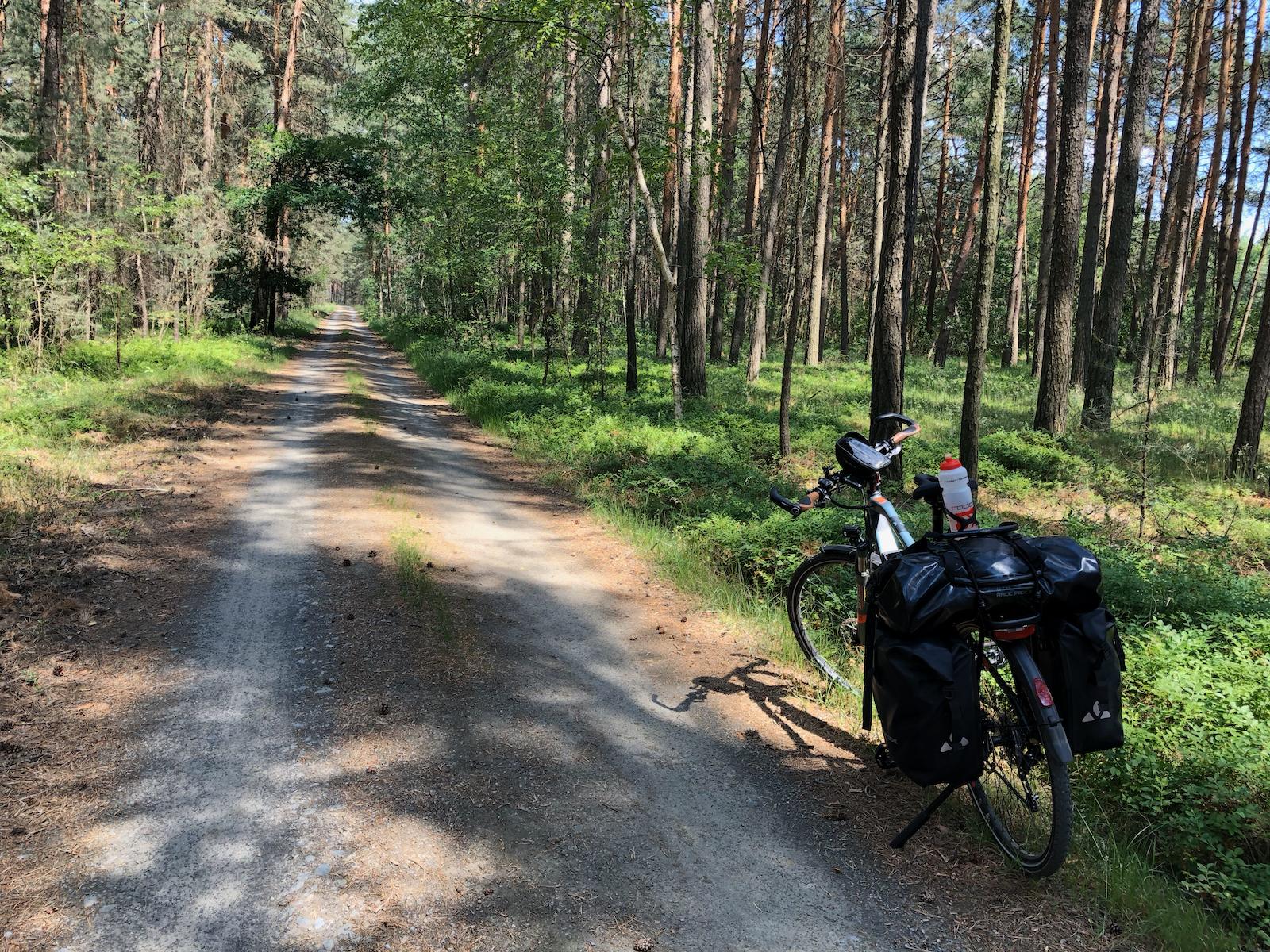 Unterwegs durch sächsische Wälder auf der Suche nach Futter!